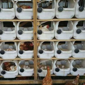 poultry house pictures