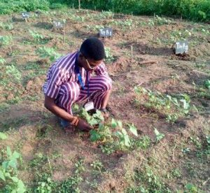 cultural practices in agriculture