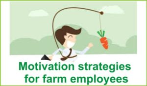 motivation strategies for farm employees
