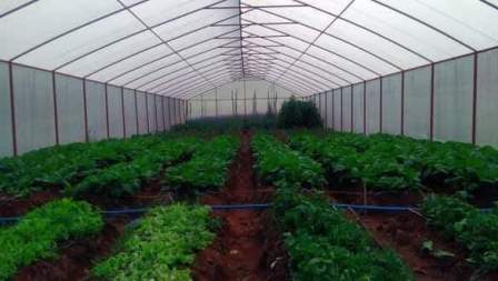 agronomic practices in greenhouse