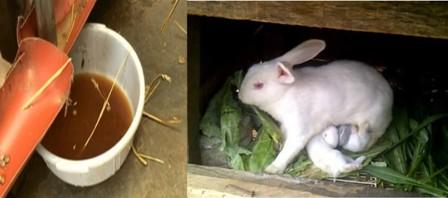 rabbit urine as fertilizer