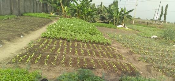 drilling method of planting