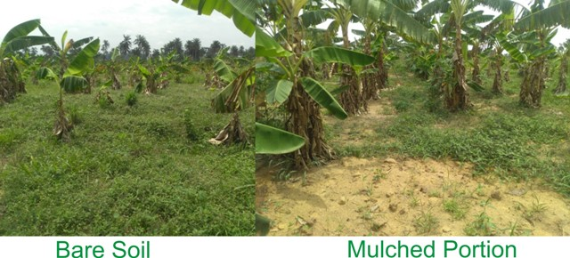 weed control with mulch